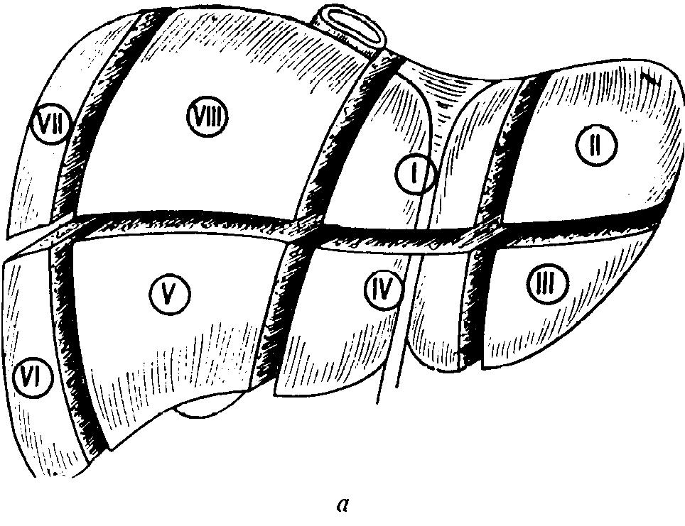измерение печени по узи