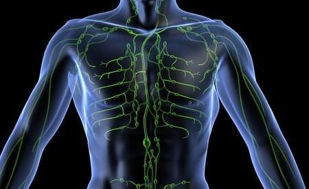 3д проекция тела мужчины с отмеченной желтым цветом лимфатической системой