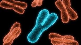 трехмерная проекция X и Y хромосом