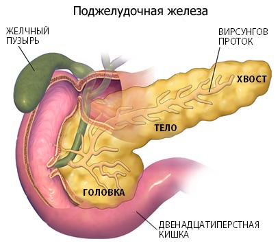 Форма протоков в поджелудочной железе