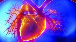 сердце рисунок