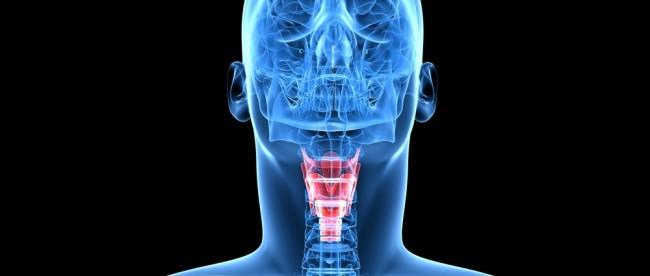 место нахождения щитовидной железы