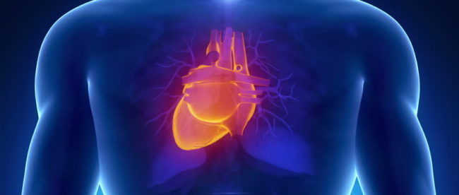 эхограмма сердца, эхокардиография, УЗИ сердца